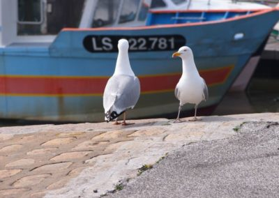 Goéland sur un port
